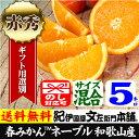 ネーブルオレンジ春柑橘 春みかん(紀州有田産)/サイズ選別無し5kg【送料無料】