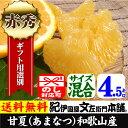 あまなつ(紀州有田産の春みかん)4.5kg/手選り選別・ギフト用特選品甘夏には種があります。気を付けてお召し上がり下さい。