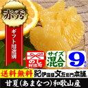 完熟あまなつ(紀州有田産)ギフト用選別品9kg
