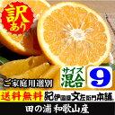 紀州有田産紀州有田産 わけあり柑橘完熟田の浦オレンジ(新甘夏・サンフルーツ)(買得品9kg)ご家庭用甘夏には種があります。気を付けてお召し上がり下さい。