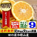 紀州有田産完熟田の浦オレンジ(新甘夏・サンフルーツ)9kg 手選り選別・ギフト用特選品