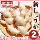 フレッシュ新しょうが2kg入和歌山県産 【送料無料】紀ノ川河口で栽培されている高品質