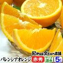 【送料無料】バレンシアオレンジ[レギュラー品]5kg・有田みかんのふるさと和歌山県産