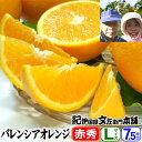 武内さんちのバレンシアオレンジギフト用【秀】選別 Lサイズ7.5kg【送料無料】有田