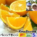 武内さんちのバレンシアオレンジご家庭用【送料無料】サイズ混合5kg 約25〜40玉前後