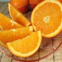 ネーブルオレンジ約5kg/サイズ選別なし【送料無料】紀州和歌山有田地方から「春かんきつ」見た目良くないワケアリ果実
