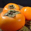送料無料・和歌山の柿(贈答用)西浦さんちのフレッシュ富有柿約3.5〜4kg[12〜16個入] 【赤秀】特選ギフト・和歌山県産