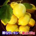 瀬戸田産 樹なりレモン(化学農薬不使用栽培)C級品 10キロ【送料無料】【檸檬】国産レモン