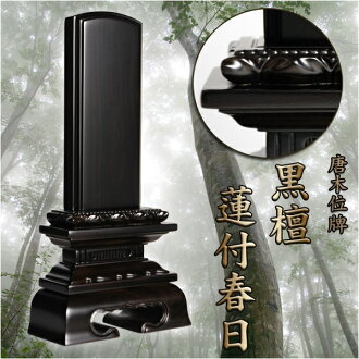 Mortuary ebony Lotus with Kasuga 4.0 inch