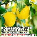 まるも 生姜粉末 ◆40g×3袋セット◆高知県産 しょうが 100%使用 《蒸し生姜》