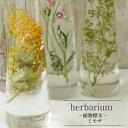【あす楽対応品】ハーバリウムボトル ミモザ2018-植物標本-母の日ギフト】【Healing Bottle】