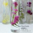 ハーバリウムボトル スターチス<フィッシャーピンク>−植物標本−プチギフト
