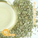 Herb_eucalyptus10