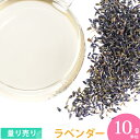 Herb_lavender10
