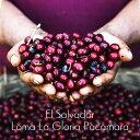 エルサルバドル ロマ ラ グロリア パカマラ 200g 送料無料 発送日焙煎 丁寧なハンドピック