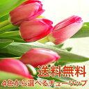 花 送料無料 チューリップ 花束 20本 贈り物 ギフト 選べる 赤 ピンク イエロー お祝い プレ