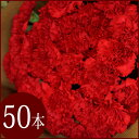 【送料無料実施中】赤いカーネーションの花束【楽ギフ_包装】【フラワーギフト】【母の日】 ギフト 贈り物 プレゼント お祝い