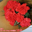 送料無料 赤いカーネーションの花束 10本母の日ギフト 贈り物 プレゼント お祝い 母の日 ギフト