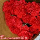 送料無料 赤いカーネーションの花束 20本 ギフト 贈り物 プレゼント お祝い