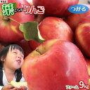 りんご の常識を変える★葉とらず栽培 本場青森ゴールド農園 送料無料 【葉とらずりん