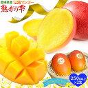 父の日 ギフト フルーツ マンゴー 送料無料 宮崎県産 鉢植栽培ならではの濃厚な甘さを産地直送 宮崎 完熟 マンゴー 父の日 フルーツ