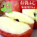 日本一のリンゴ産地青森県から産地直送!!家庭用5kgご自宅で毎日どうぞ♪青森りんご【有袋ふじ家庭用5kg】(18〜23玉)<送料無料>[※ゴールド農園から産地直送のため同梱不可]