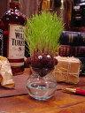 気分はカリスマ美容師だ!芝生育てキット ■ アメリカ雑貨 アメリカン雑貨 観葉植物 通販 こだわり派