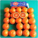 ブラッド オレンジ オルトジェル ブラッドオレンジジュース リットル