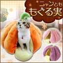 【全品ポイント2倍!13日9:59迄】《当店イチオシ★!!》ニャンとももぐる実 かぼちゃ・