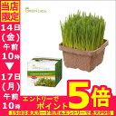 【最大350円OFFクーポン有】猫草 犬と猫が好きな草 栽培...
