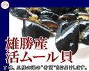 宮城 雄勝産 殻付きムール貝/4kg/黒く輝く旨味の宝庫