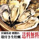 牡蠣 訳あり 送料無料 宮城産 殻付き牡蠣 3kg 生食