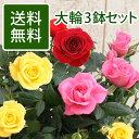 【送料無料★2980円】大輪ミニバラ★品質お試し3鉢セット★...