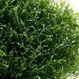 (水草)プレミアムグリーンモス バラ(無農薬)(1パック分) 北海道航空便要保温