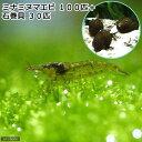(エビ・貝)コケ対策セット 大型水槽用 ミナミヌマエビ(100匹)+石巻貝(30匹)