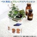 (熱帯魚)ベタ(青系)とプランツアクアリウム飼育セット 本州・四国限定
