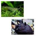 熱帯魚 貝 画像