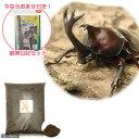 (昆虫)本州・四国限定 国産カブトムシ 成虫 1ペア + XLマット カブト用 10リットル 観察日記セットおまけ付き