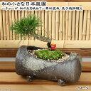 (観葉)私の小さな日本庭園 〜チャーボ 松の丘を眺めて〜 三河黒松盆栽 益子焼鉢植え