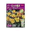 (観葉植物)JFBYコレクション チューリップ球根 フレミング パーロット(2007年受賞品種) 4球詰(1袋)
