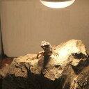 形状お任せ 爬虫類用バスキングスポット 〜ウォーム ストーン〜 小2個 爬虫類 レイアウト用品 関東当日便