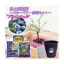 (観葉植物)私の果樹園 〜ブルーベリー栽培セット(ブライトウェル)〜(苗木・土・プランター・肥料他6点セット)家庭菜園 お一人様5点限り