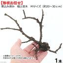 形状お任せ 煮込み済み 極上流木 Mサイズ(約20〜30cm...