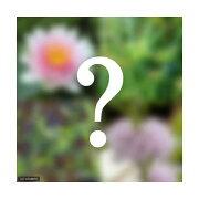 (ビオトープ)水辺植物 ビオトープビギナーセット 温帯性スイレン+水辺植物3種類