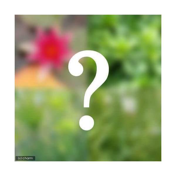 (ビオトープ/水辺植物)ビオトープビギナーセット 姫スイレン+水辺植物3種類...:chanet:10040593