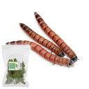(生餌)レッドワーム(ジャイアントミルワーム ジャンボミルワーム) 300g 栄養強化セット 本州・四国限定