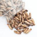 冷凍★冷凍ヨーロッパイエコオロギ Mサイズ 100g 爬虫類エサ 無添加 無着色 別途