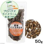 乾燥イエコオロギ 50g(約600〜650匹入り) プロバグズライスワーム15gおまけ付き 関東当日便
