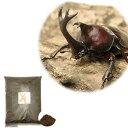 (昆虫)本州・四国限定 国産カブトムシ 成虫 1ペア + XLマット カブト用 10リットル