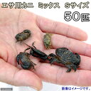 (海水魚 カニ)生餌 エサ用カニ ミックス Sサイズ(50匹) 北海道航空便要保温